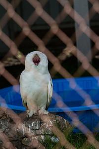 birds-of-prey-9562