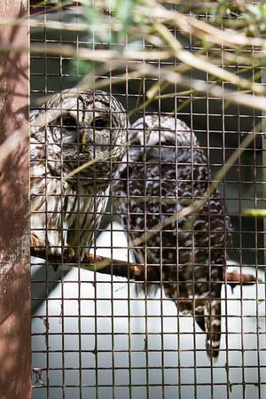 birds-of-prey-9549