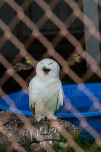birds-of-prey-9566