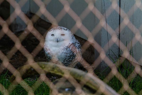 birds-of-prey-9581