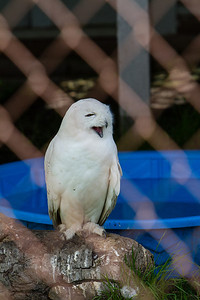 birds-of-prey-9595