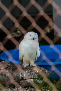 birds-of-prey-9572