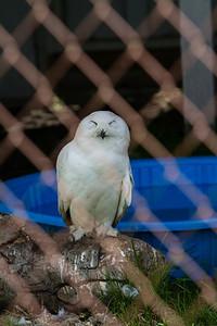 birds-of-prey-9565