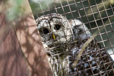 birds-of-prey-9537