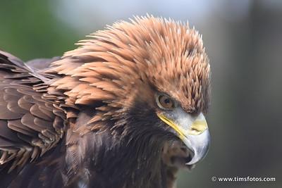 Head feathers ruffled