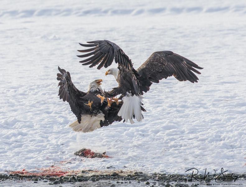 Eagle Food Fight
