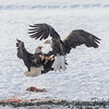 Eagle Food Fight