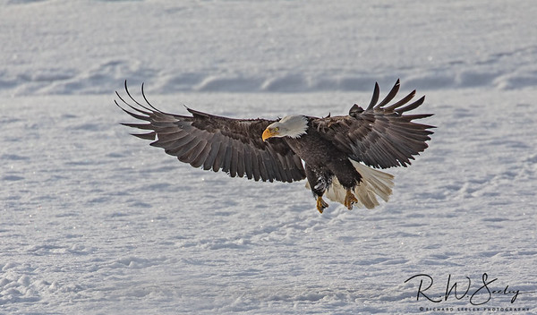 Wide Wing Landing
