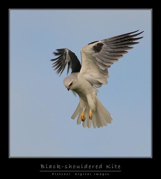 Kite_4309-FW