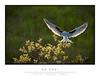 Kite_9079-FW