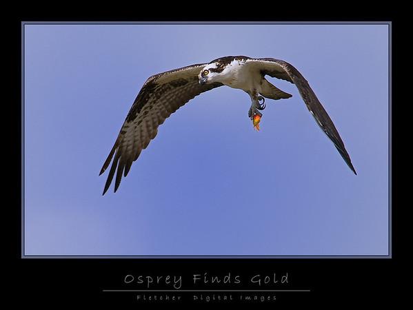 Osprey7569-fw