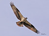 An Osprey taken Feb 2, 2010 in Phoenix, AZ.