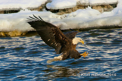 I knew I had captured the sequence of shots as this eagle came in for a fish. But I felt like a kid on Christmas morning when this picture popped up on my computer screen.