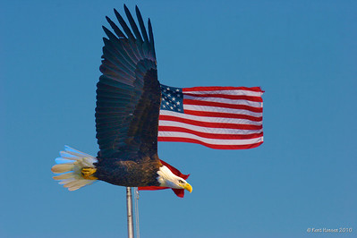 The Mississippi River Lock and Dam system offers an abundance of bald eagles, stiff breezes, and the American flag. Dumb luck or photoshop... you decide!