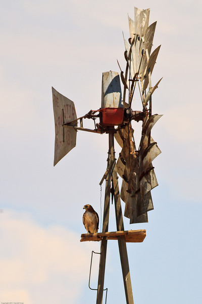 A Red-tailed Hawk taken July 20, 2011 near Pine Springs, TX.