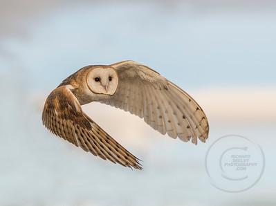 Barn Owl Hug