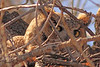 A Great Horned Owl taken Mar 21, 2010 in Grand Junction, CO.