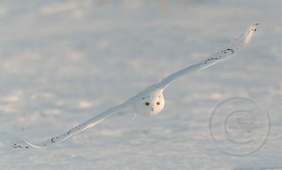 Gliding Turn