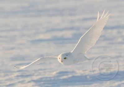Snow Skimmer
