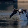 Eagle-7