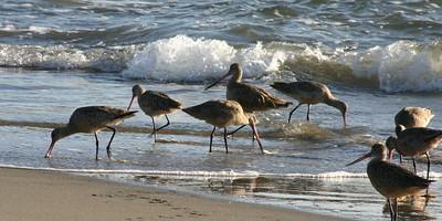Birds by the Sea