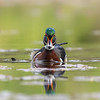 """The Wood Duck Glare"""