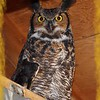Whooo are you looking at!