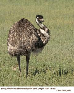 Emu CA67897