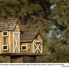Mountain Chickadee M23693