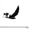 Swallow-tailed Kite plus attacker 82285