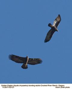 Golden EaglesP63127