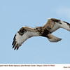 Rough Legged Hawk F78622