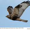 Rough Legged Hawk F78640