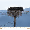 Osprey nest on Radio Telescope Lens 97800