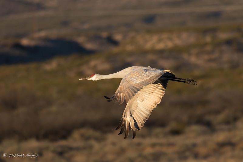 Lead the way.  Bosque Del Apache NM