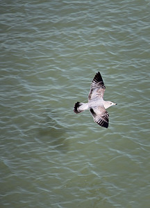 Seagull Edgewater Park Cleveland, OH
