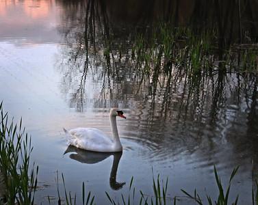 Lake Logan 2012