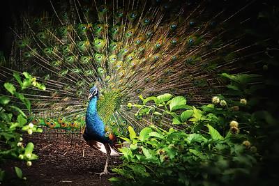 Toledo Zoo 6-22-2012 (106)