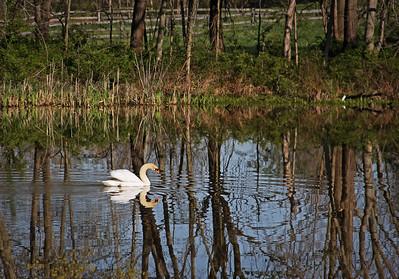 Lake Logan 4-2012 (737) LR