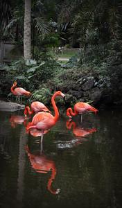 Flamingo Gardens, FL 2012