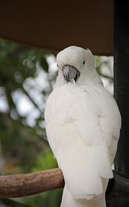 Miami Seaquarium 2012 Parrot
