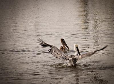 amelia island 12-25-2012 (218)-1 LR