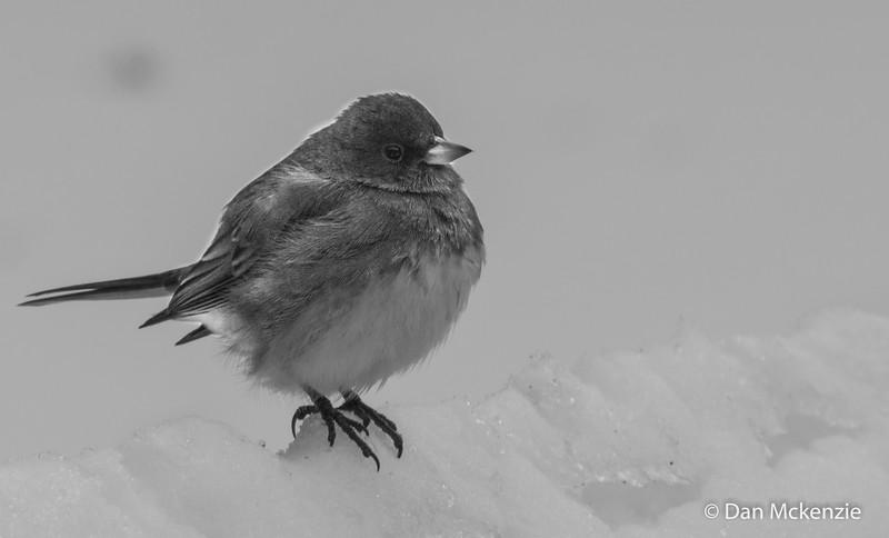 01-04-2014-bird_(1_of_3)