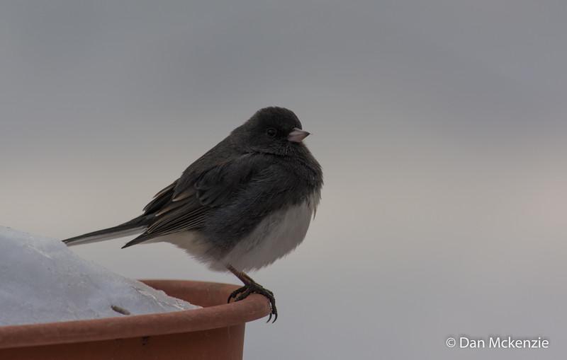 01-04-2014-bird_(2_of_3)
