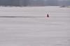 Mississippi Glacier Ducks