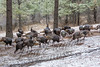 Birds, wild turkeys