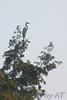 Great Egret<br /> Busch Wildlife Area, Lake 33