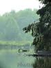 Great Egrets<br /> Busch Wildlife Area, Lake 33