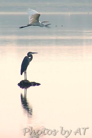 2005-09-10 Busch Wildlife Conservation Area