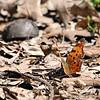 Busch Wildlife Conservation Area